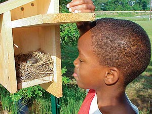 Checking the nest box by Tammie Sanders