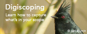 Tips on getting started with digiscoping