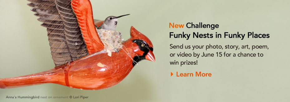 Funky Nests in Funky Places: Send us your entry by June 15 for a chance to win prizes!