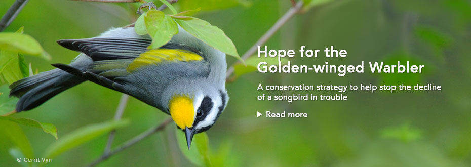 Golden-winged Warbler Conservation Resources