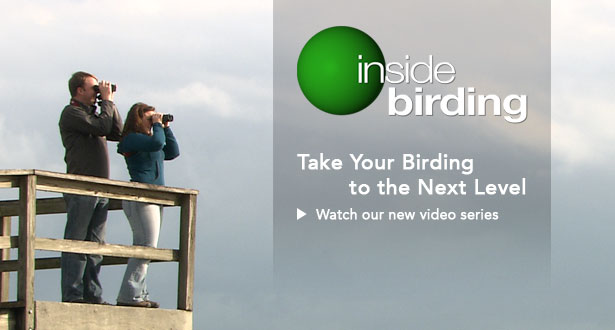 Inside Birding: Take your birding to the next level, watch the videos and learn