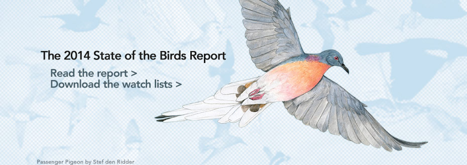 Read the 2014 State of the Birds Report