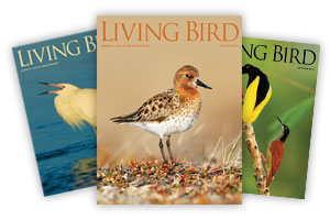 Living Bird Magazine Archived Covers