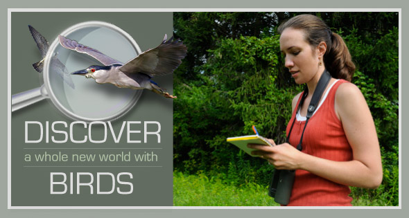 Discover a whole new world with birds