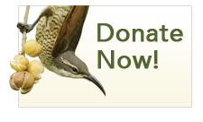 Donate to the Cornell Lab