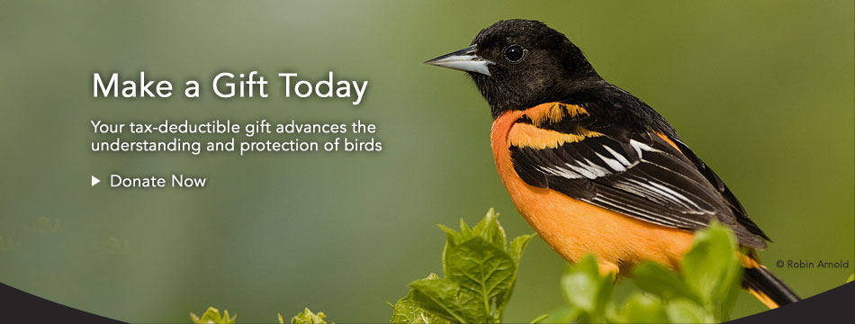 Help the future for the birds, donate now.