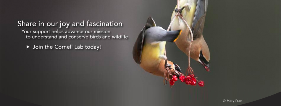 Share in our joy and fascination with birds and the natural world. Your support will advance the understanding, appreciation, and conservation of wildlife.