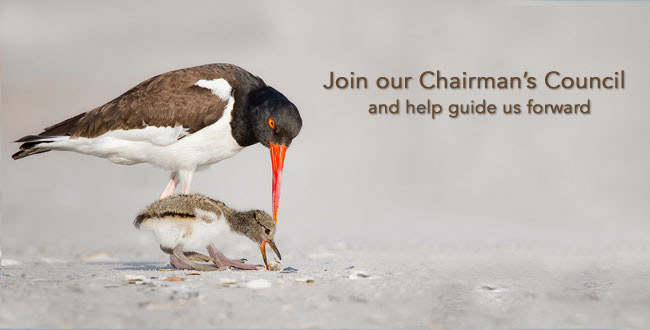Chairmans Council—avocets landing