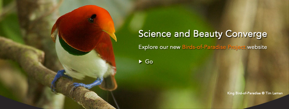 Science and Beauty Converge: Explore our new Birds-of-Paradise Project website.