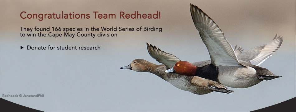 Congratulations Team Redhead! They found 166 species in the World Series of Birding to win the Cape May County division