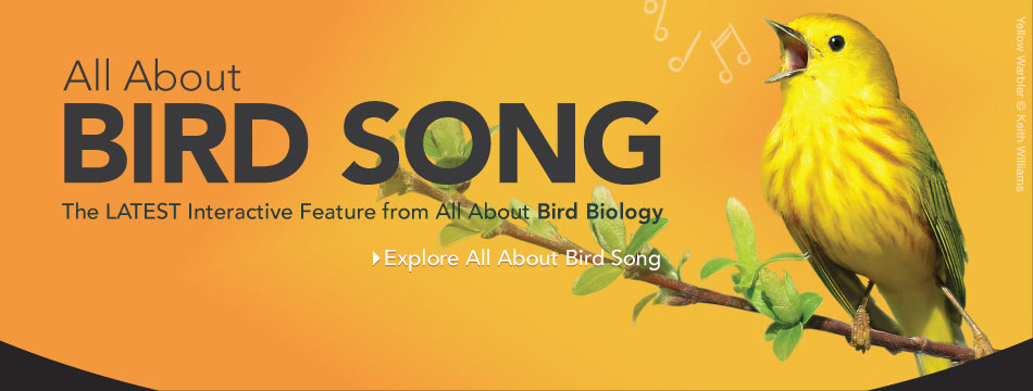 All About Birdsong