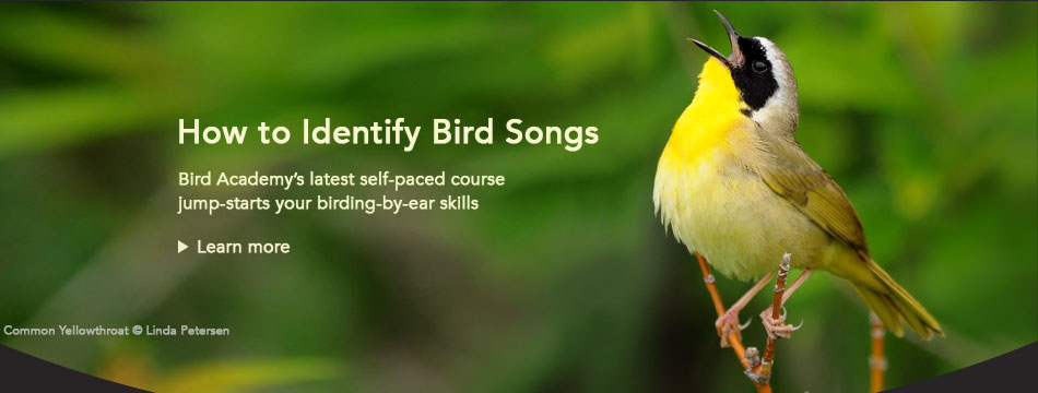 Bird Academy: Identify Bird Songs
