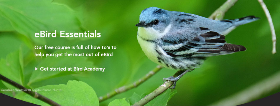 Free course: eBird Essentials, Cerulean Warbler by Digital Plume Hunter