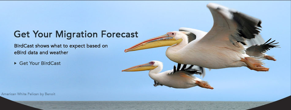 Migration Forecast with Birdcast