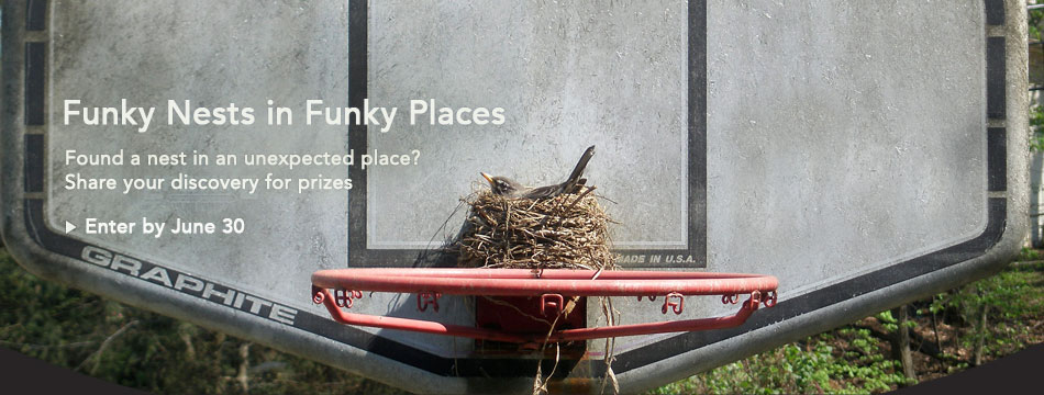 Funky Nests in Funky Places