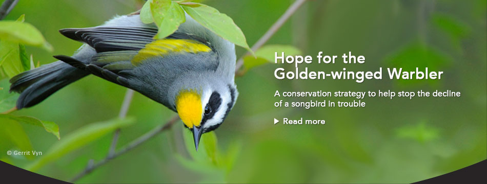 Golden-winged Warbler Conservation Plans