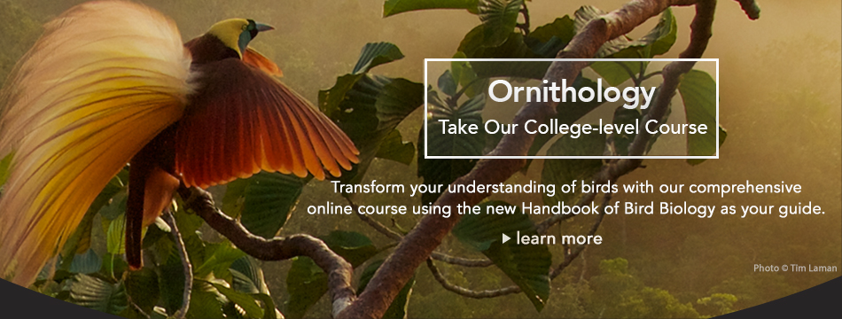 Ornithology Course from Bird Academy