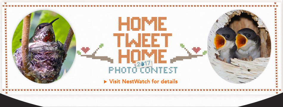 Home Tweet Home Photo Contest