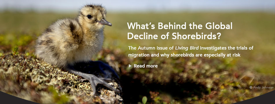 Latest Living Bird magazine, Autumn 2018