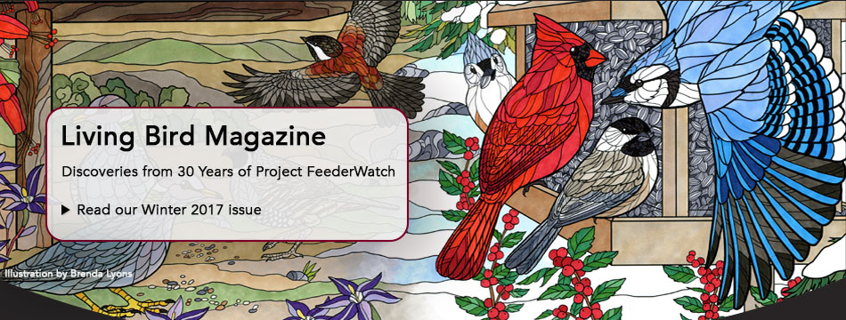 Latest Living Bird magazine