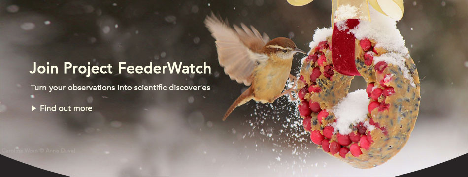 Project FeederWatch
