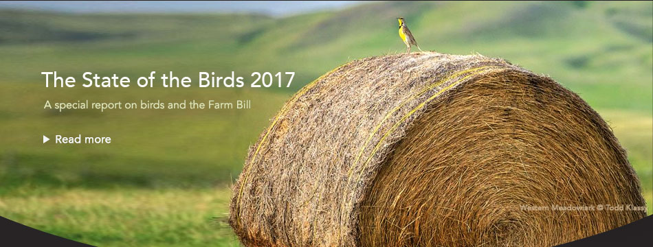 The State of the