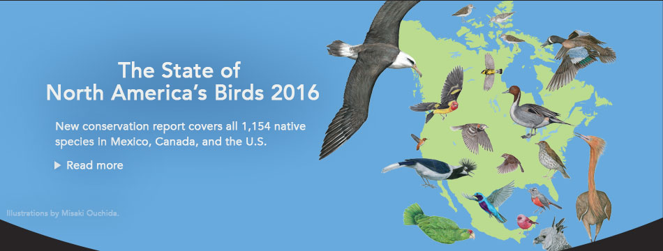 State of North America's Birds 2016