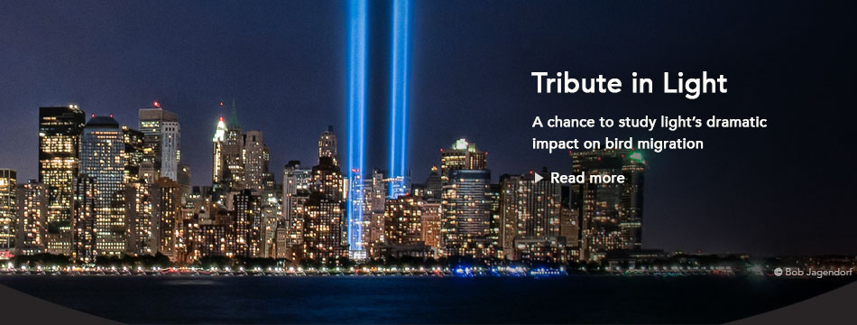 Tribute in Light and Bird Migration