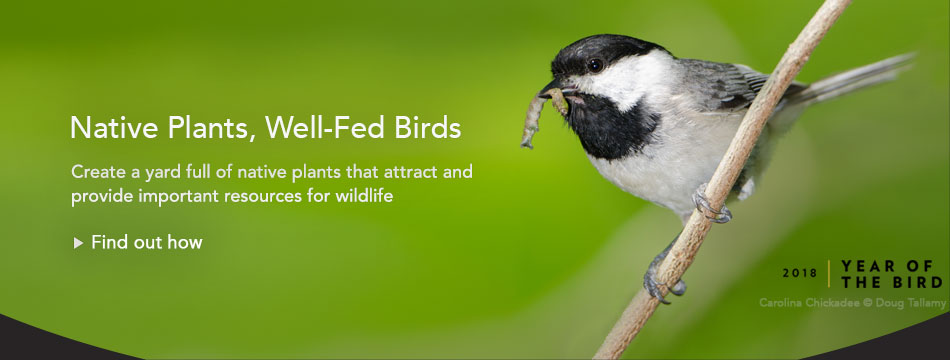 Year of the Bird, March: Native Plants Mean Well Fed Birds