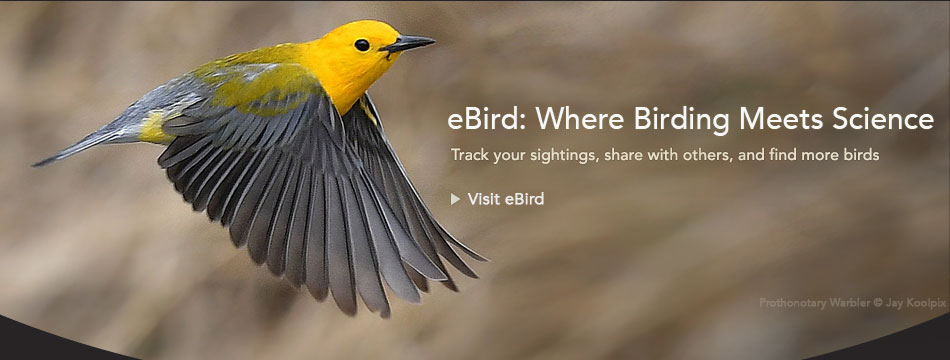 eBird: Birding Meets Science