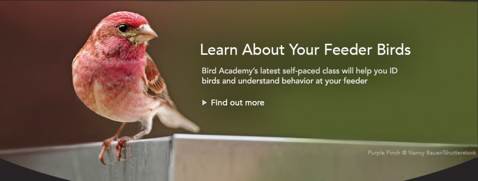 Feeder Birds Course: ID and Behavior