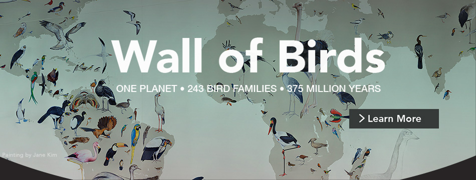 Wall of Birds Interactive