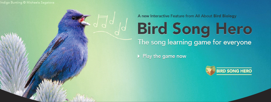 Play Bird Song Hero