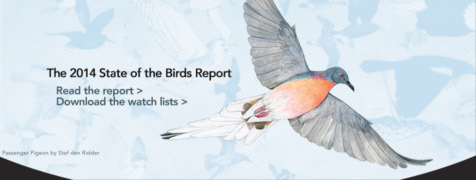 Read the State of the Birds 2014 Report