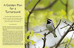 Living Bird article: A Golden Plan for a Turnaround