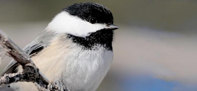 Citizen science is one way you can help us in our work for birds—directly.