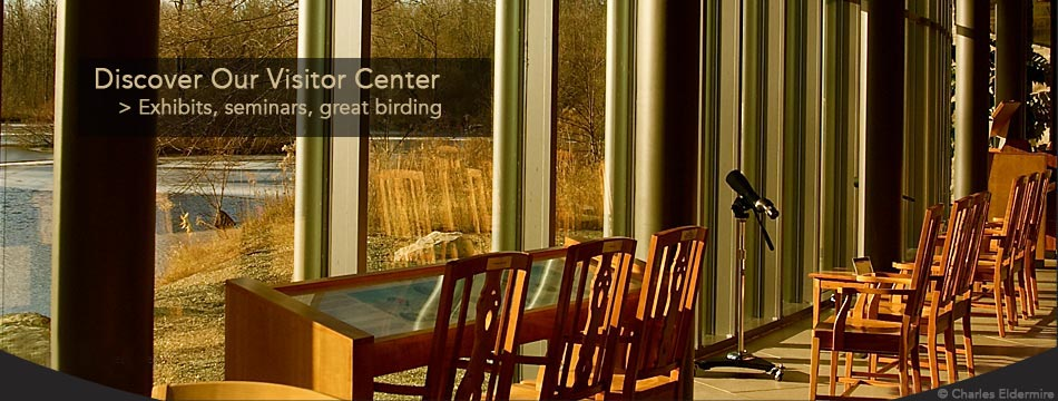 Our Visitor Center has sound and video exhibits, beautiful bird art, weekly seminars, beautiful views, a feeder garden, and binoculars and telescopes for your use.