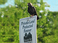 bird on land trust sgn