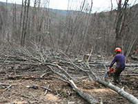 logging site