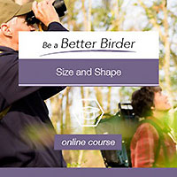 Be a Better Birder Tutoriala
