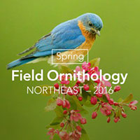 Spring Field Ornithology Course
