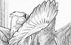 The Bird Watching Answer Book - Living Bird