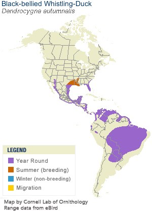 Black-bellied Whistling-Duck Range Map