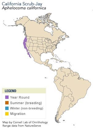 California Scrub-Jay Range Map