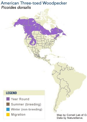 American Three-toed Woodpecker Range Map