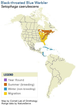 Black-throated Blue Warbler Range Map
