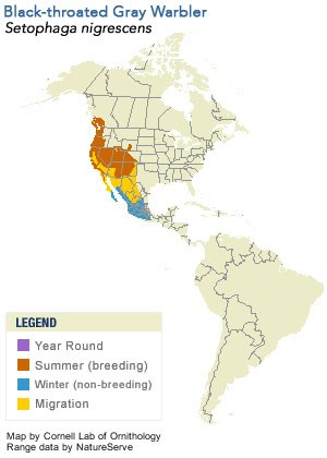 Black-throated Gray Warbler Range Map