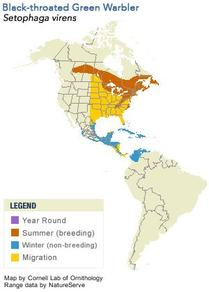 Black-throated Green Warbler Range Map