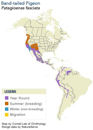 Band-tailed Pigeon Range Map