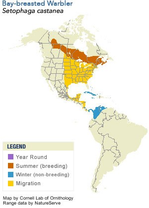 Bay-breasted Warbler Range Map